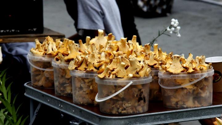 На улицах Новосибирска начали торговать лисичками