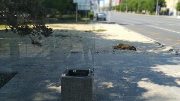 «Хочу жить в красивом городе»: волгоградец показал «фантастические песочницы» вместо остановок