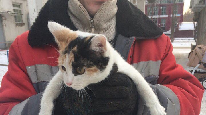 Уфимские спасатели достали кота с крыши многоэтажки