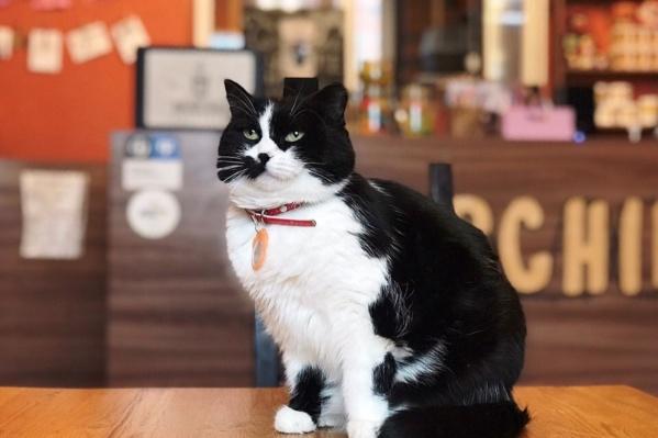 Котиков поселят во временные дома