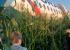 «Уральские авиалинии» начали выплачивать компенсации пассажирам самолета, аварийно севшего в поле