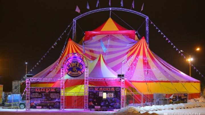 Пума выбежала из цирка у «КомсоМОЛЛА» и прыгнула на прохожую