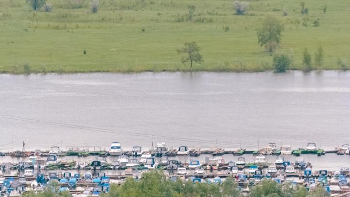 В Самарской области вымерло почти 7000 карасей