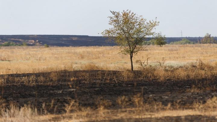 Волгоградцам запретили с 1 апреля жарить шашлыки на природе