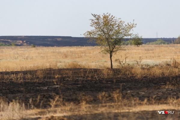 Особый режим вводится во избежание ландшафтных пожаров