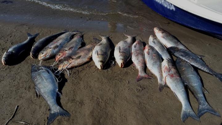 Волгоградским рыбакам, пострелявшим крупных толстолобиков, грозят уголовным делом