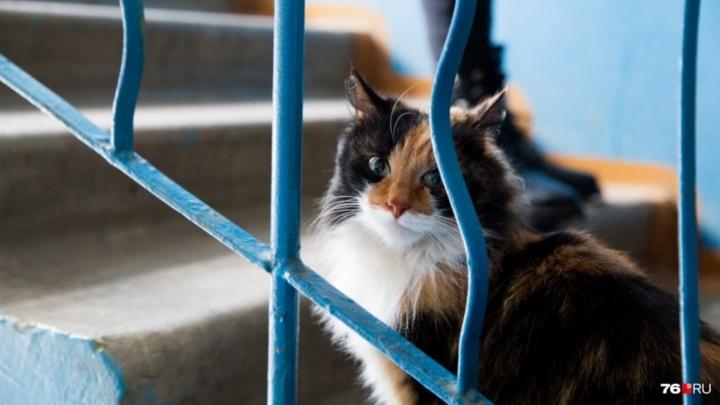 Мужчине, расстрелявшему соседей из-за кота, грозит 12 лет колонии