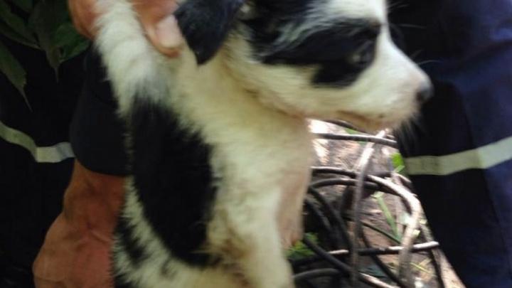 Уфимские спасатели вызволили упавшего в колодец щенка