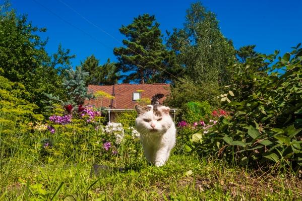 Котики тоже не хотят осень