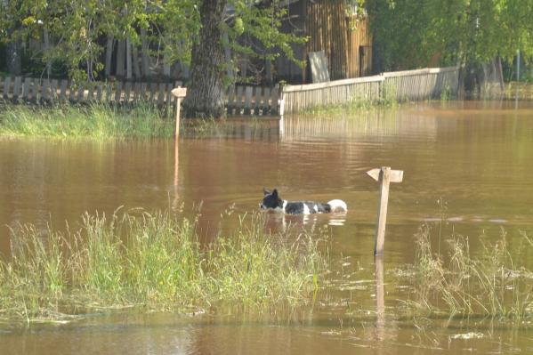 В Юрле собака переходит эту реку в брод