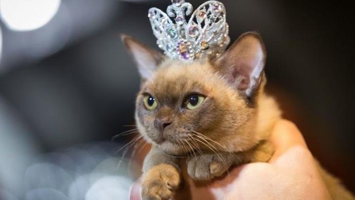 «Радиола 106.2 FM» выберет «Главную кошку Екатеринбурга»