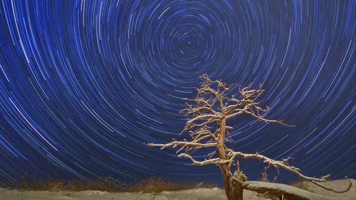 Нашествие милых свиристелей и гигантская мистическая сосулька: выбираем лучшее фото января на Е1.RU