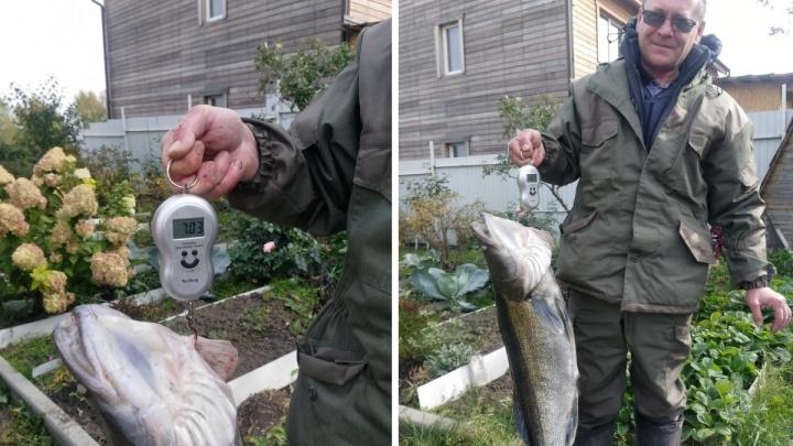 Сибиряк поймал в Берди огромного судака