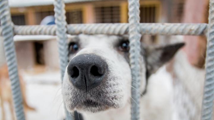 Стало известно, сколько бездомных собак должны отловить в Самаре за год