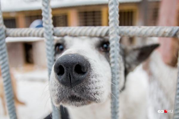 После стерилизации животное должны вернуть в привычную среду