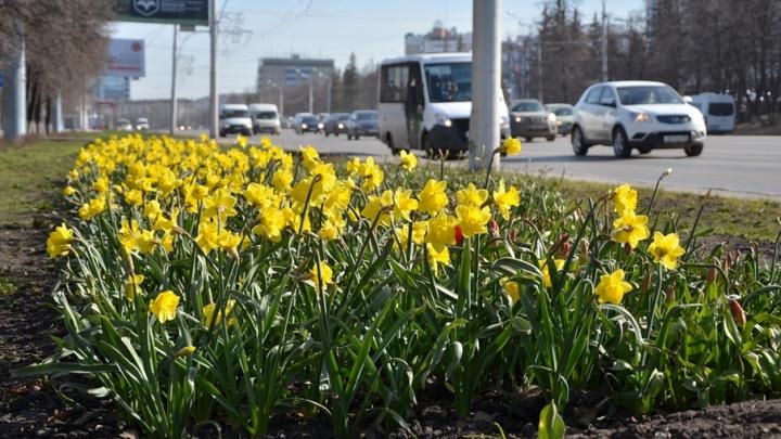В Уфе за три года высадили более 1,7 миллиона многолетних цветов