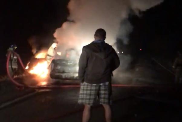 Лось устроил тройное ДТП в Ярославской области: сгорели дорогие иномарки