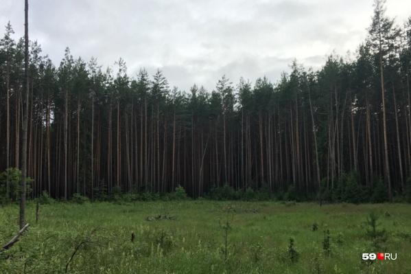 Идешь в лес — надень яркую одежду