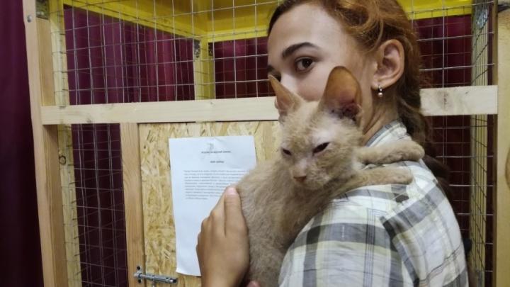 Уфимцам покажут самых редких и дорогих кошек страны