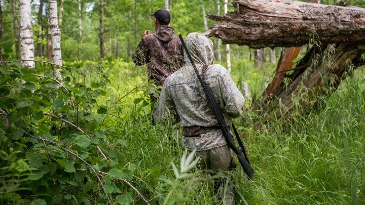 Кабанам дадим отпор: новосибирцы объявили охоту на свиней из Омской области