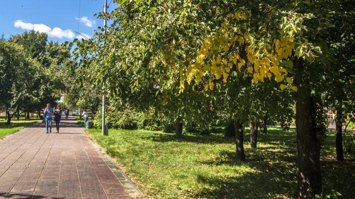 Лето сделало паузу: северный воздух несёт в Новосибирск прохладную погоду