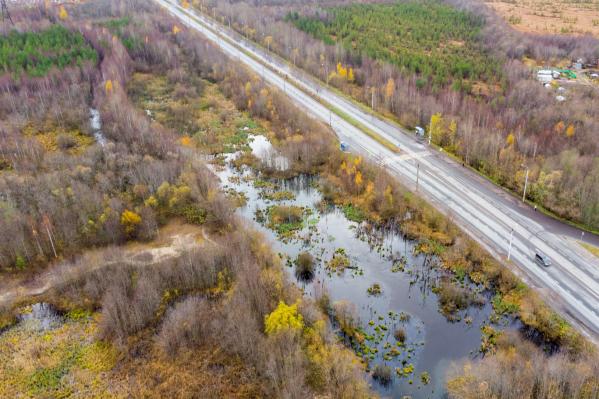 Это болото вдоль Маймаксанского шоссе тоже, скорее всего, канализационное