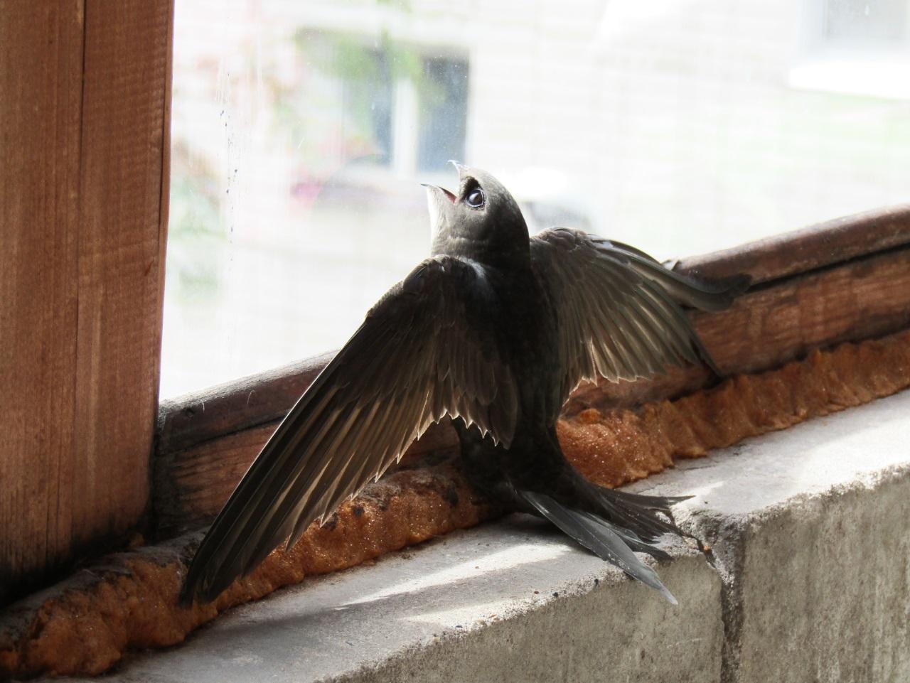 Женщина быстро выходила птицу