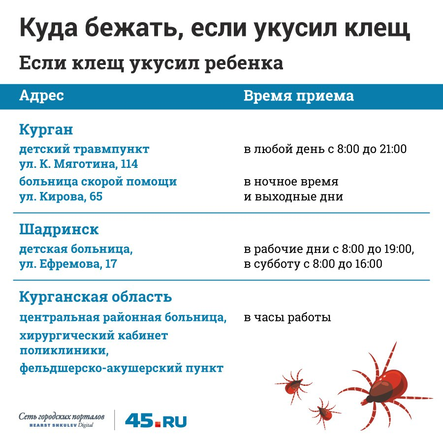 Падают ли с берёз и за что кусают людей: 45.ru сходил в лабораторию, где исследуют клещей