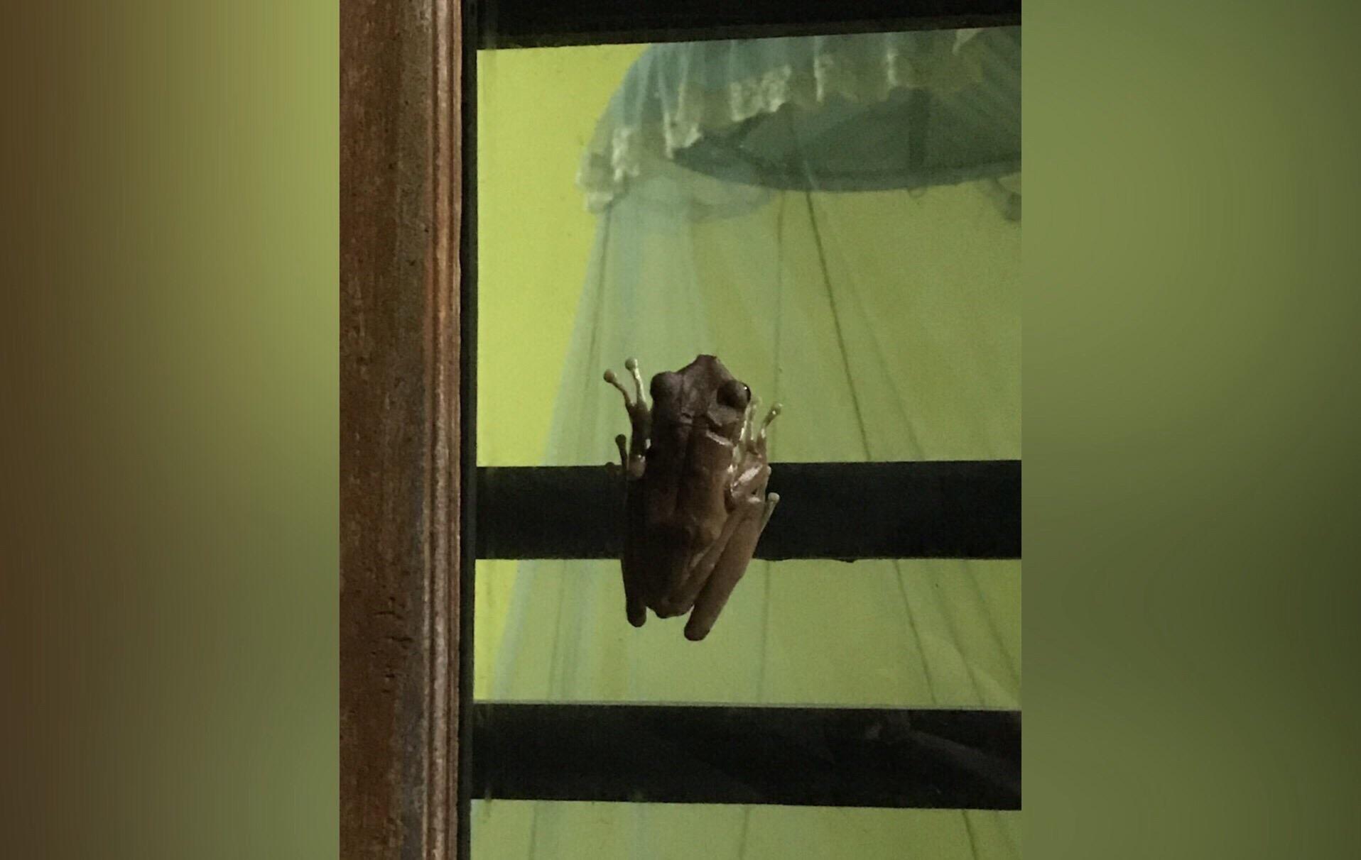 Привет вам от заморской прыгучей зверушки, которая никогда не видела пушистых сугробов и инея на ветках деревьев