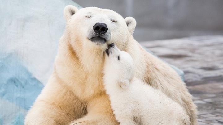 Медведь родился