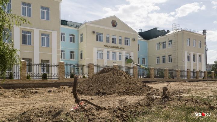 «Если они умрут, придется сажать новые»: в Волгограде у здания 7-й больницы порубили вязы