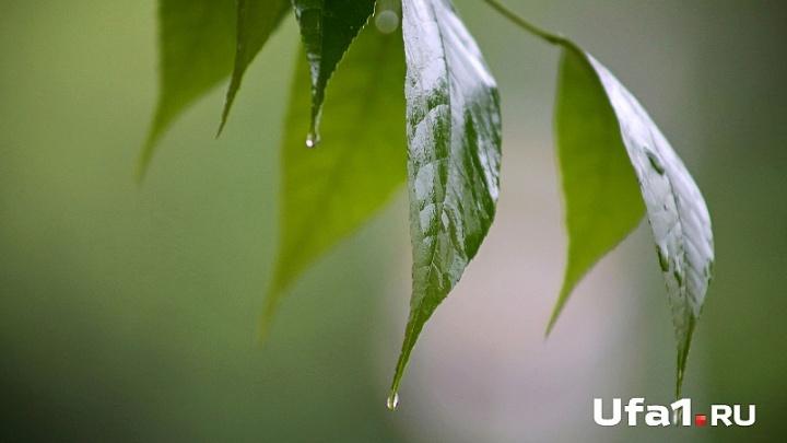 Погода в Башкирии на 18 июня: дожди и грозы