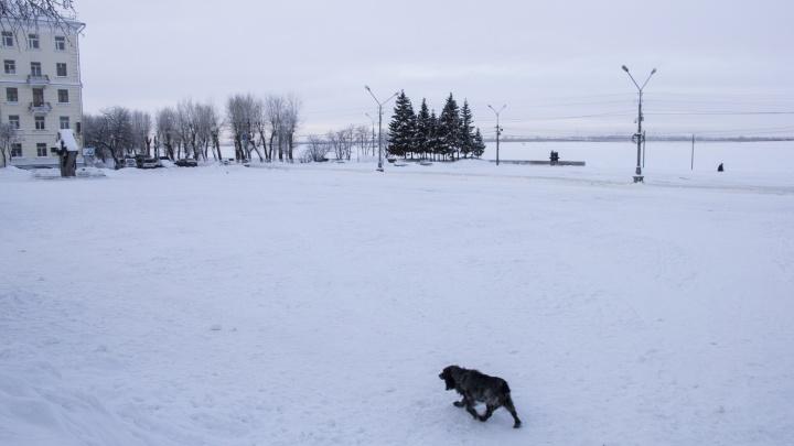 Хоть снежком покати: что было в Архангельске, который закрыли для антимусорных протестов