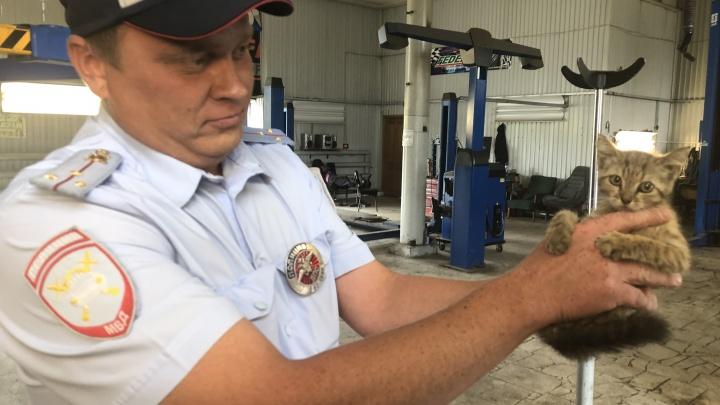 В Самарской области полицейские обнаружили под капотом служебной машины котенка