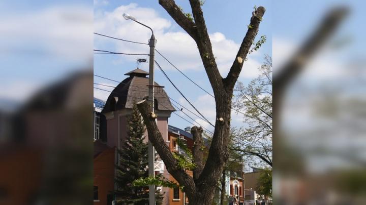 19 тысяч за сосну: в Челябинске за срубленные деревья будут брать деньгами