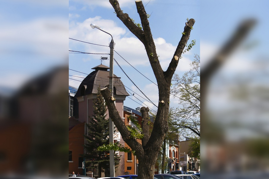Челябинцы возмущены варварской обрезкой деревьев