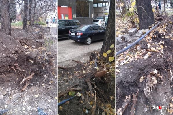 Из-за работ по благоустройству из-под земли показались корни деревьев