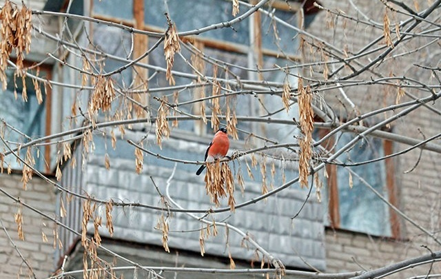 Погода на 12 апреля: в Башкирии потеплеет до +13 градусов