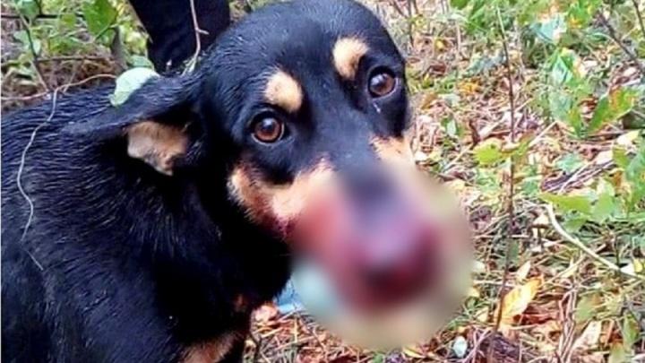 «Сказал, что таскали кур»: волгоградец на глазах женщин и ребёнка расстрелял из ружья собак