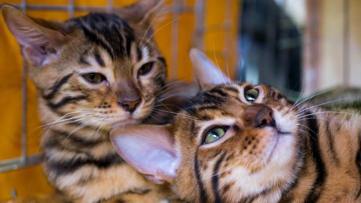 Фоторепортаж: десятки упитанных котиков показали свою красоту