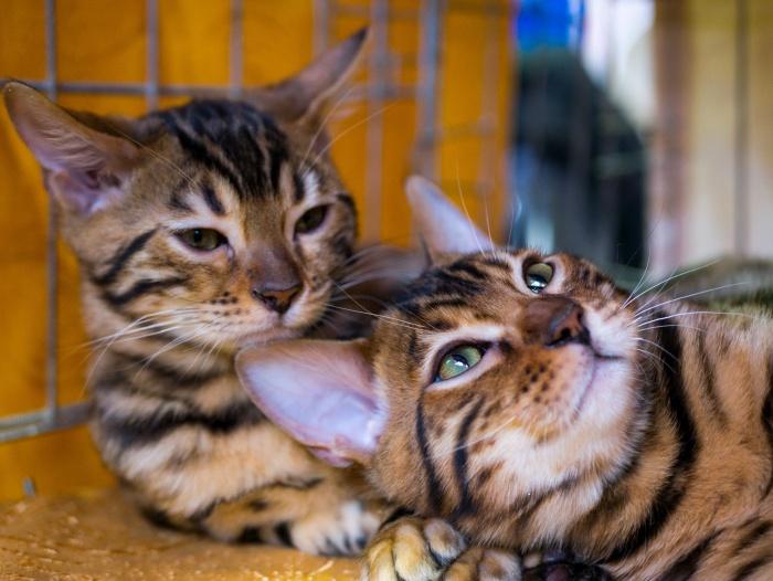 Котов-участников на выставке было около сотни