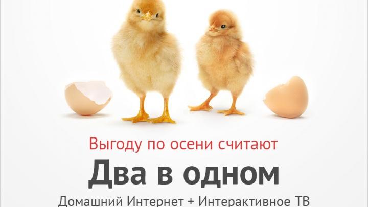 Осенняя акция «Два в одном»: ярославцам предложили интернет и телевидение по специальной цене