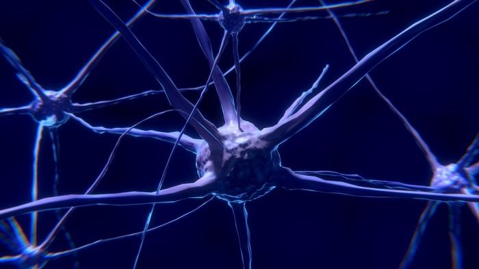 Основным направлением новосибирского нейронет-центра станет фармацевтика и медицина