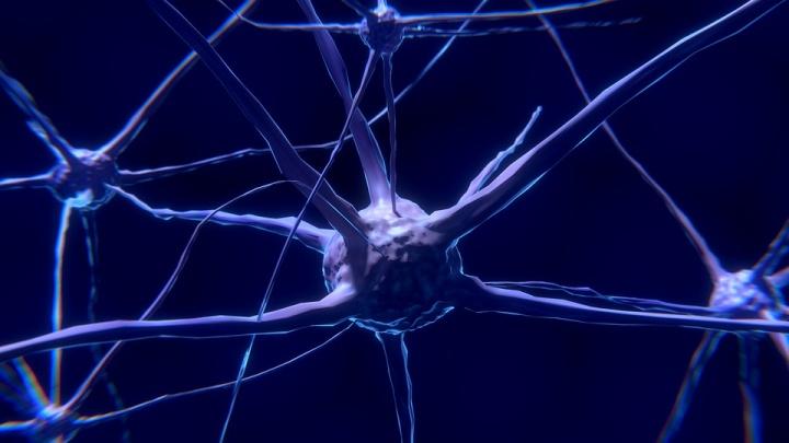 В Новосибирске появится центр развития нейротехнологий