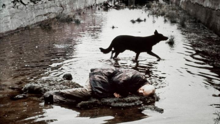 В Ярославле покажут отреставрированную версию «Сталкера» Андрея Тарковского