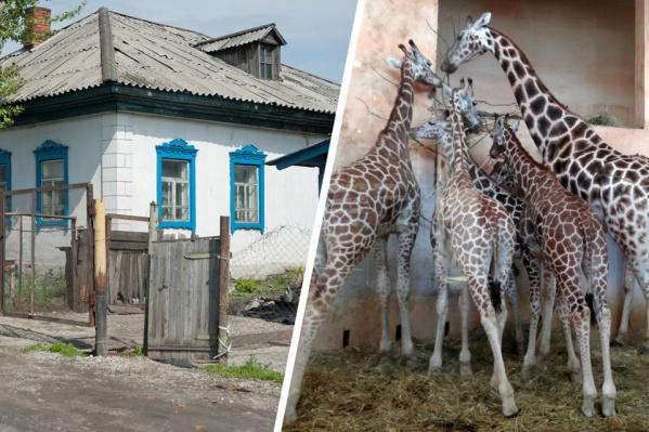На месте частных домов построят большой павильон для африканских животных