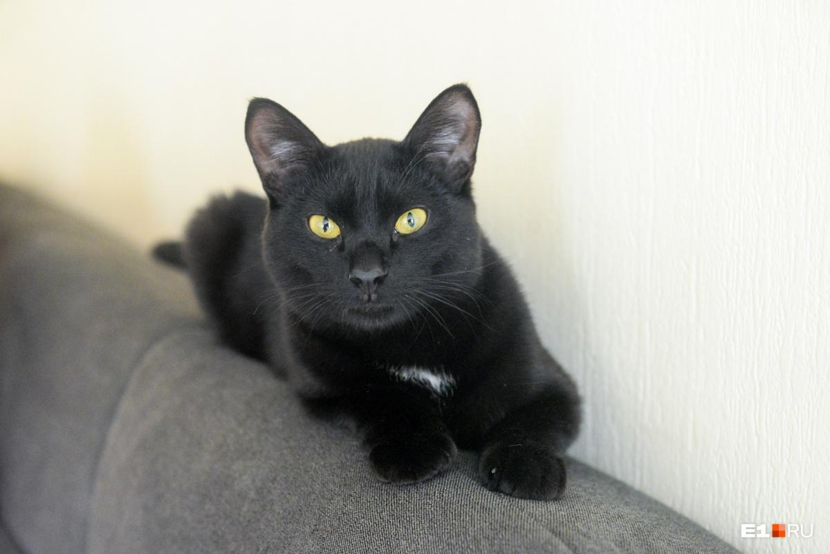 «Брат» кошки Универсиады — кот Максимка. Еще несколько месяцев назад он жил в подъезде вместе с Уней