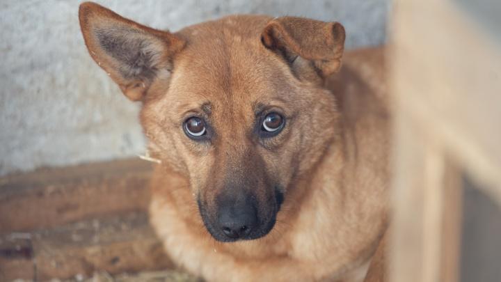 Почувствовать каждой клеткой: «ГорЭкоЦентр» к концу года должен избавиться от 150 собак