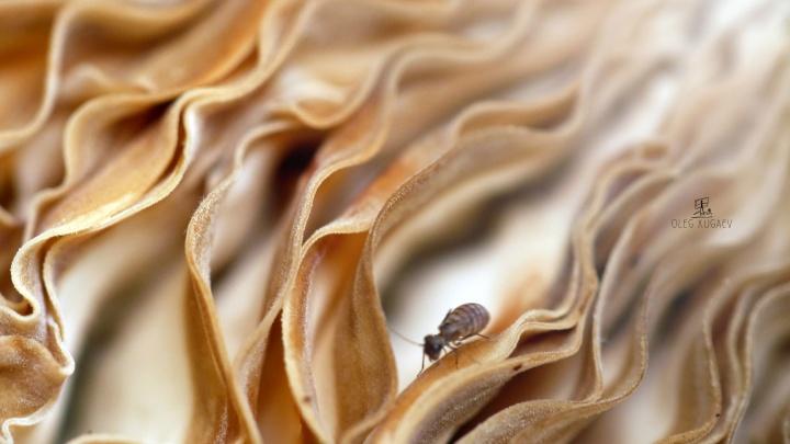 Новосибирский фотограф вошёл в финал конкурса National Geographic со снимком сеноеда — посмотрите на него