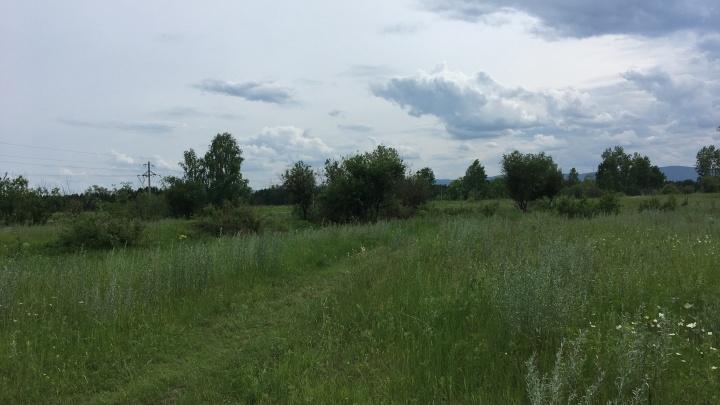 Коммерсантов оштрафовали за заросли конопли на заброшенном участке